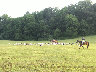 Houndwalk - July 31, 2014 - 003