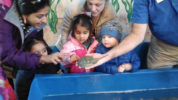 Aquarium Trip