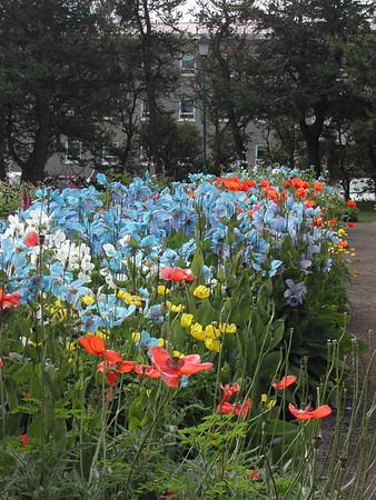 Akureyri Iceland Botanical Garden