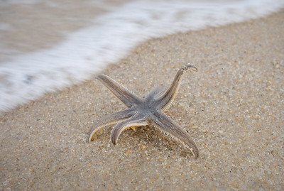 Make every little starfish count.