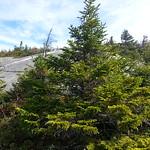 Mt. Cardigan 38