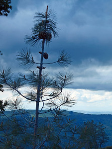 Pinecones and Clouds