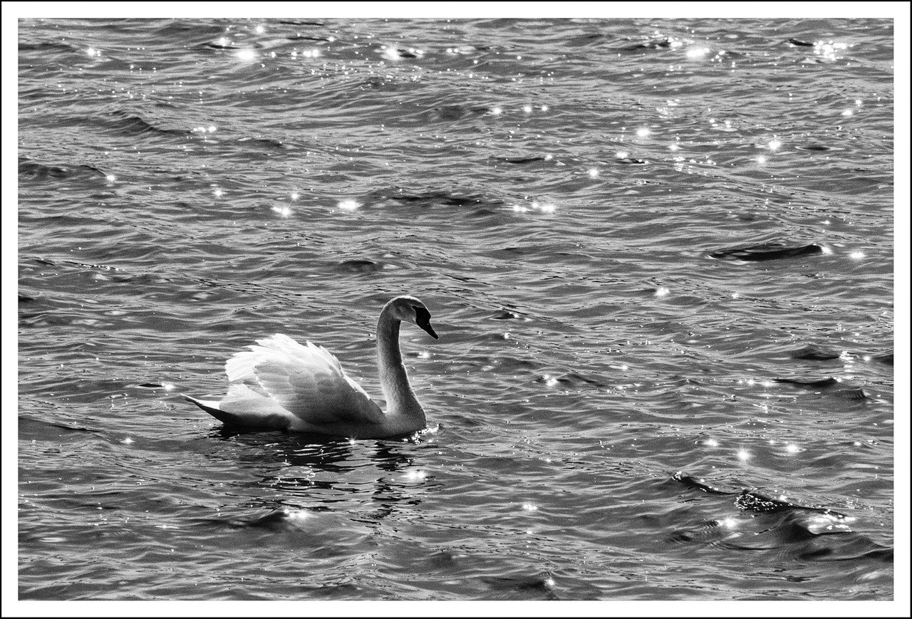 We hung out with the swans, waiting for the sunset.
