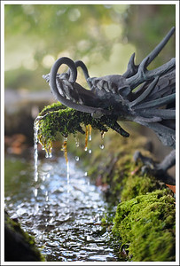 Mossy Water Dragon