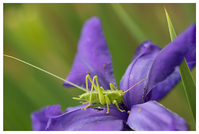 This cute little grasshopper didn't seem to mind me taking his picture.