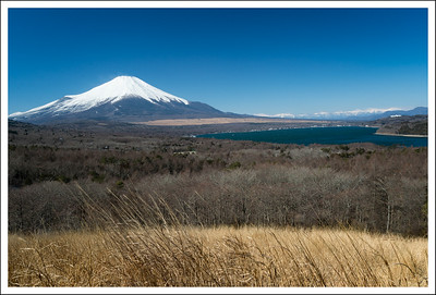 Taken at 10 am from the parking lot in mid February.  The flowers were all gone from the pampas grass.