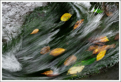 Leaves at the bottom of a small creek that feeds into Shiraito waterfall.