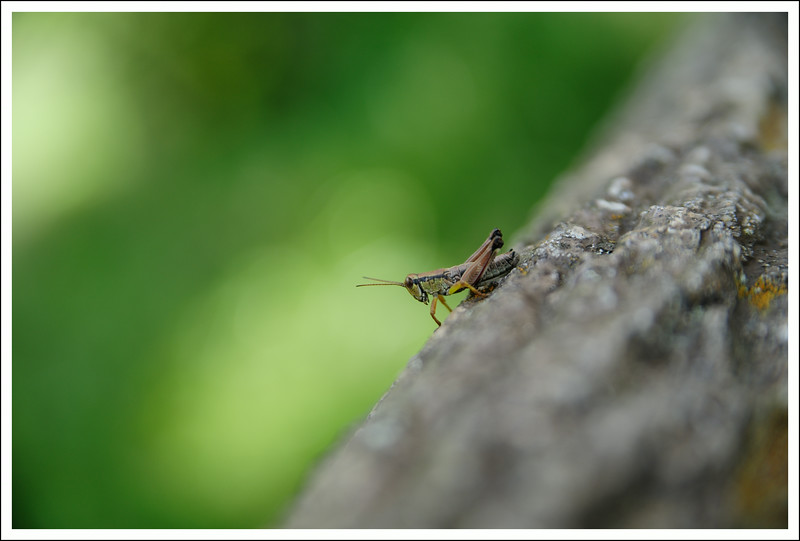 There were many grasshoppers and butterflies out enjoying the warm weather.
