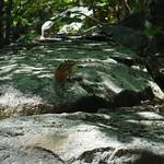 Mount Grand Monadnock 8
