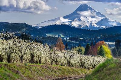Mt Hood in Spring from Pine Grove