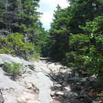 Mt Kearsarge 16