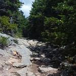 Mt Kearsarge 17