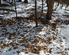 An area next to the trail where the deer have dug through the snow looking for food