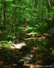 The Lost Farm trail goes through some relatively thick woods
