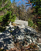 As you enter back into the woods, the Marian Trail goes over some rocky areas
