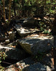 In the woods there is a jumbled area of rocks to cross