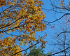 A look up while on the trail shows most of the fall colors have passed.  Leaving lots of shades and combinations of brown