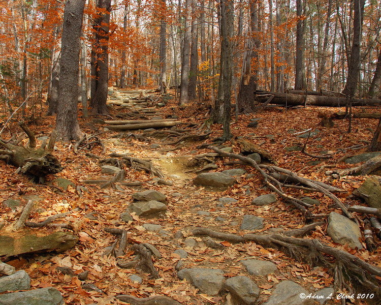 The White Dot Trail is so well used it can be filled with rocks and roots