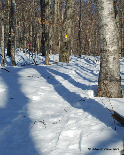 The Parker Trail was well paked so snowshoes weren't needed yet