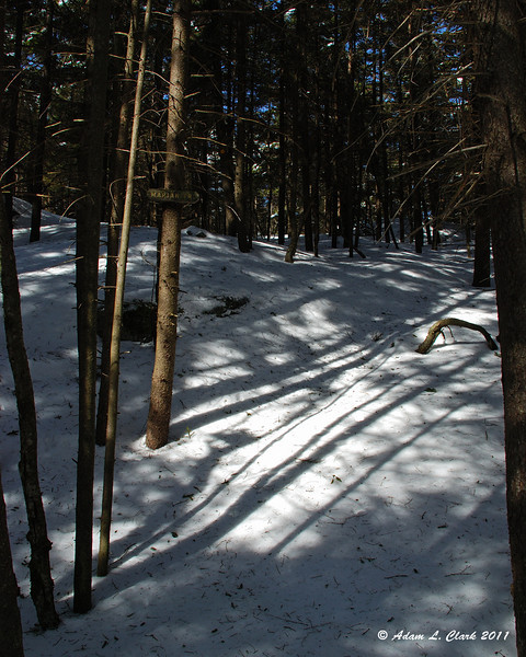 Getting to the Marian Trail, it looks like no one has been out this trail for quite some time
