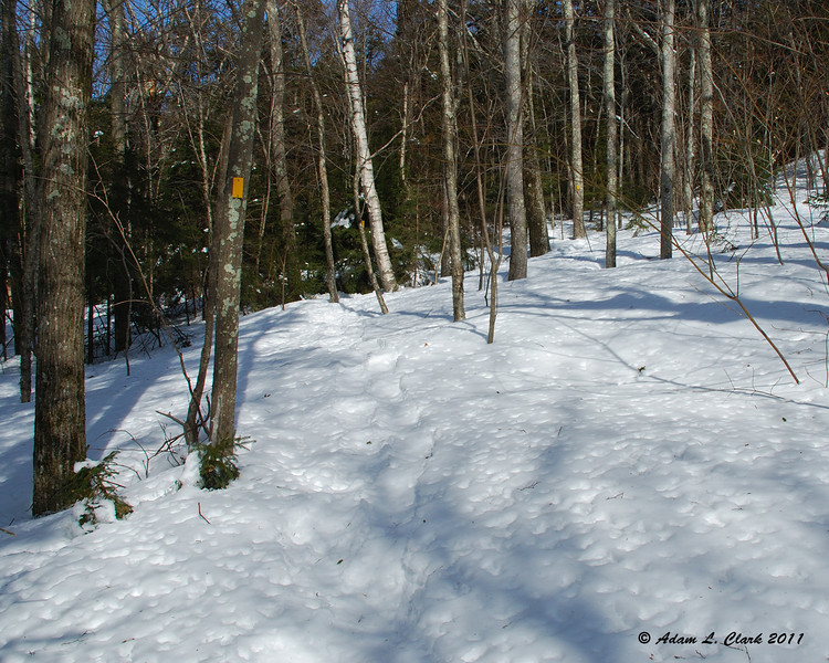 After a while in the open hardwoods, the trail comes to the edge of the softwoods.  This is where it goes from being the Cart Path to the Mossy Brook Trail