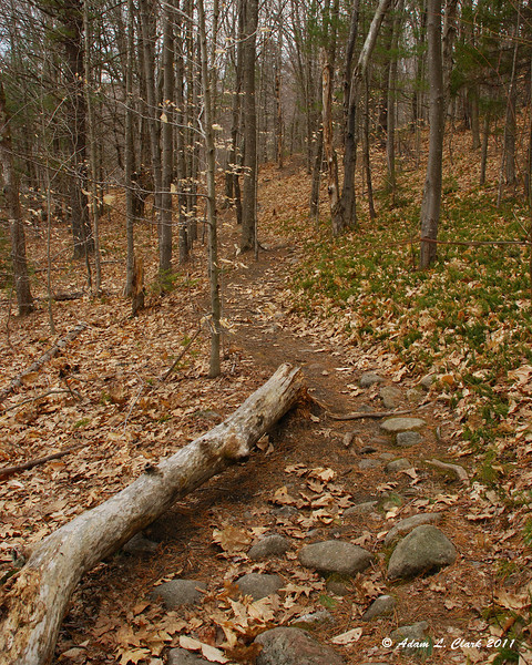 The trail passing a downed tree