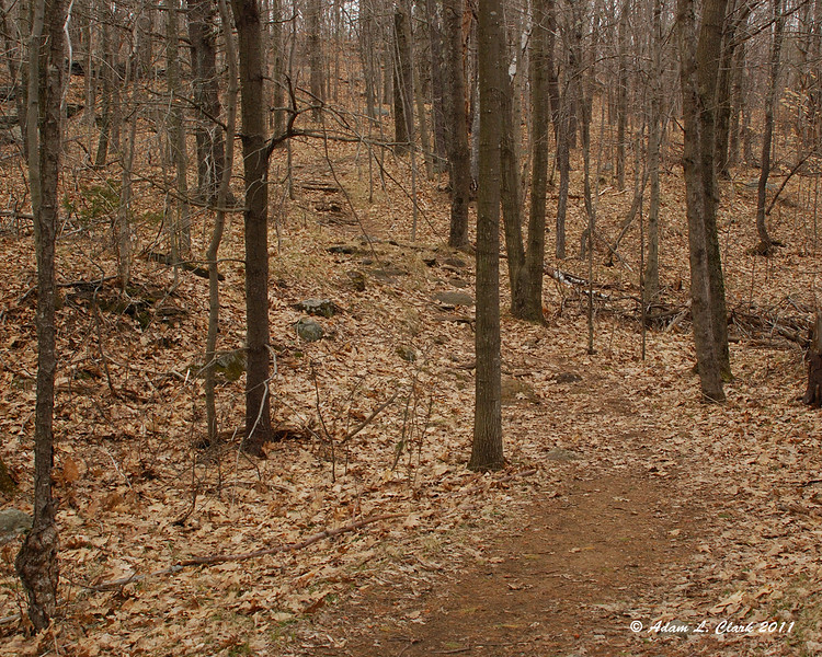 A moderate decline near the end of the Old Halfway House Trail
