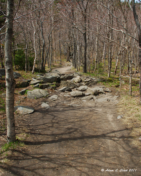 A rare level and smooth section of trail