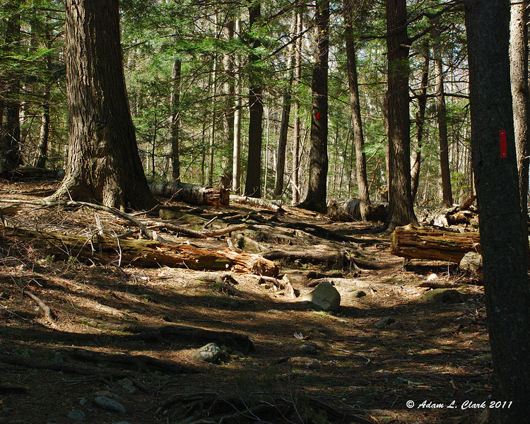 At the end of the Pond Loop Trail, I headed up the Birchtoft Trail