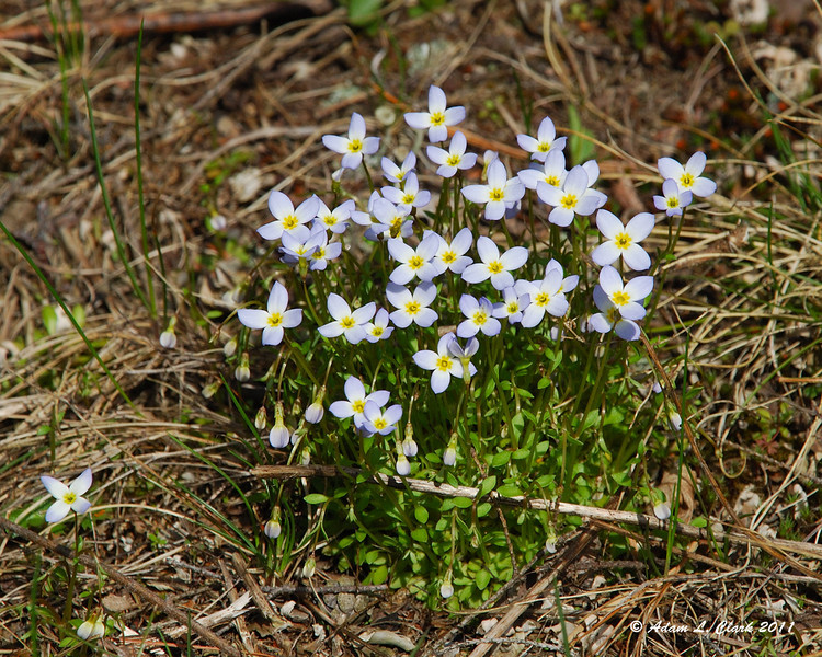 A small patch of wild flowers