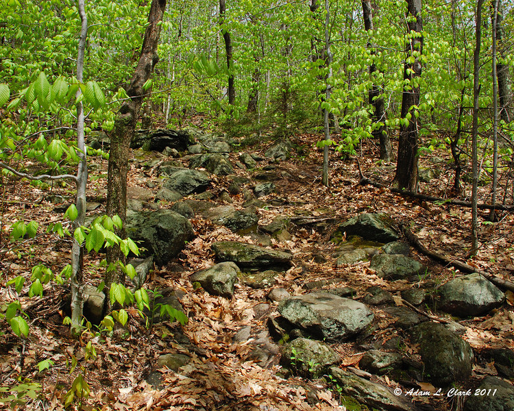 Part of the first climb on the Lost farm Trail