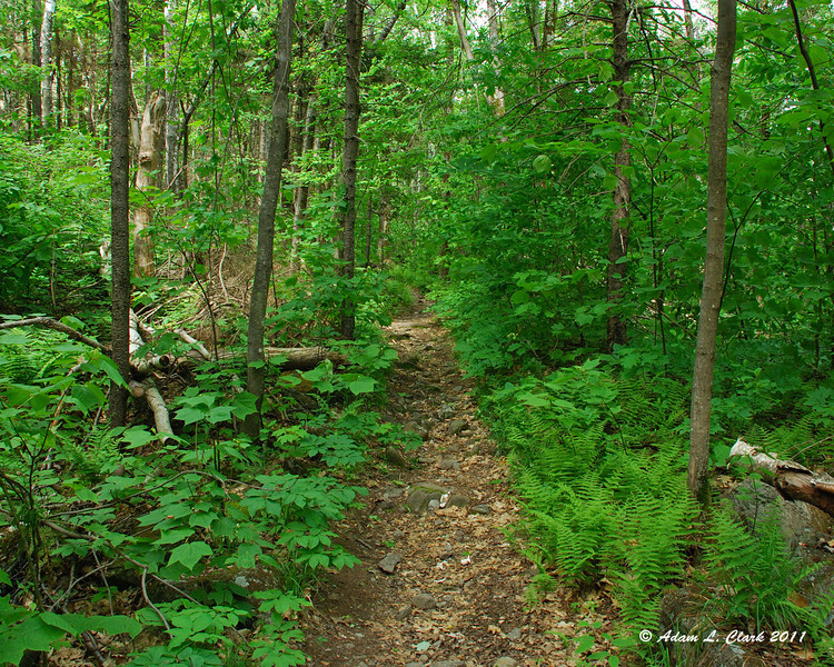A narrow section of trail leading up through the trees