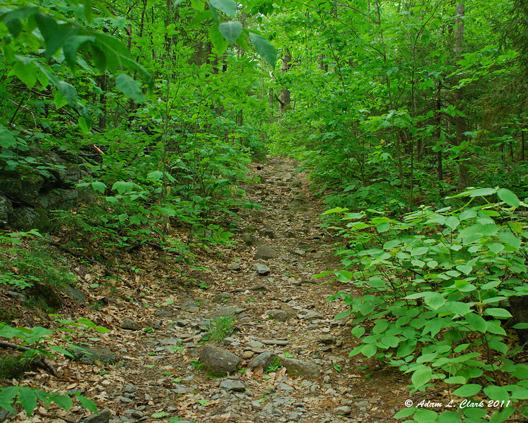 A section of the trail that follows an old road