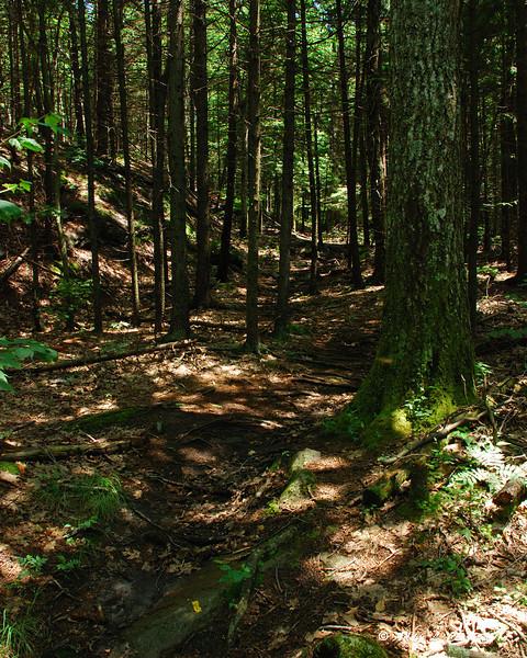 Fairy Spring Trail near Fairy Spring