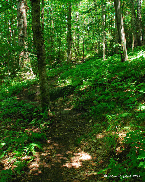 Further up the trail in all the green of the forest