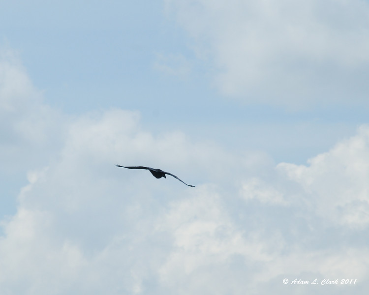 One of three crows flying around the summit