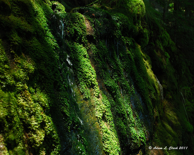 Water running over a moss covered rock next to the trail