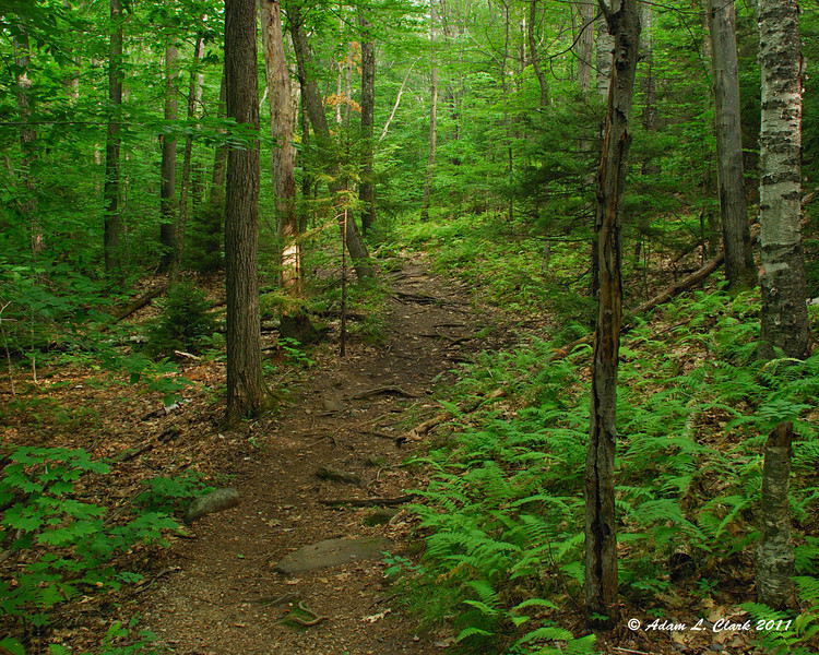 Heading up the Old Halfway House Trail