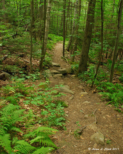 Heading back down the Old Halfway House Trail