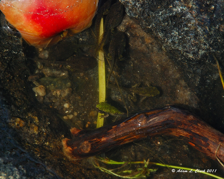 The tadpoles at the summit are getting bigger, but very slowly