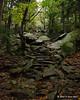 Nearing treeline on the White Arrow Trail