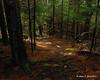 Going down the Thoreau Trail