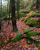 A coating of red leaves on the Hello Rock Trail