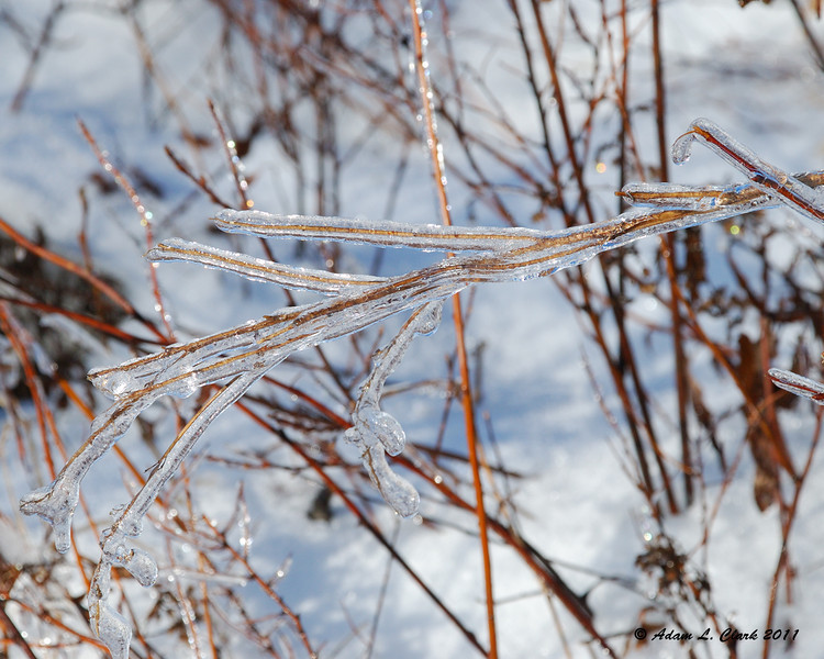 Another iced up branch