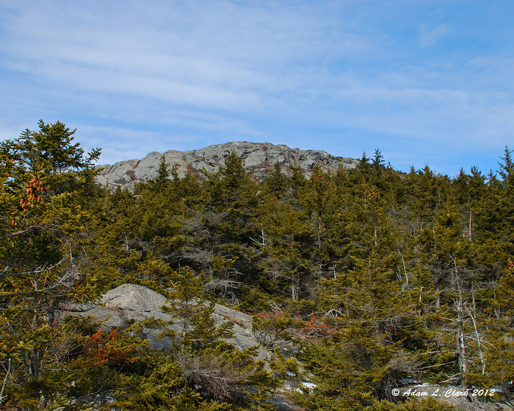 A look at the summit over the trees