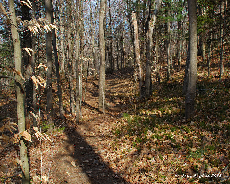 Taking the Old Halfway House Trail with it's gentle start to the climb