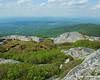 Bushes near the summit