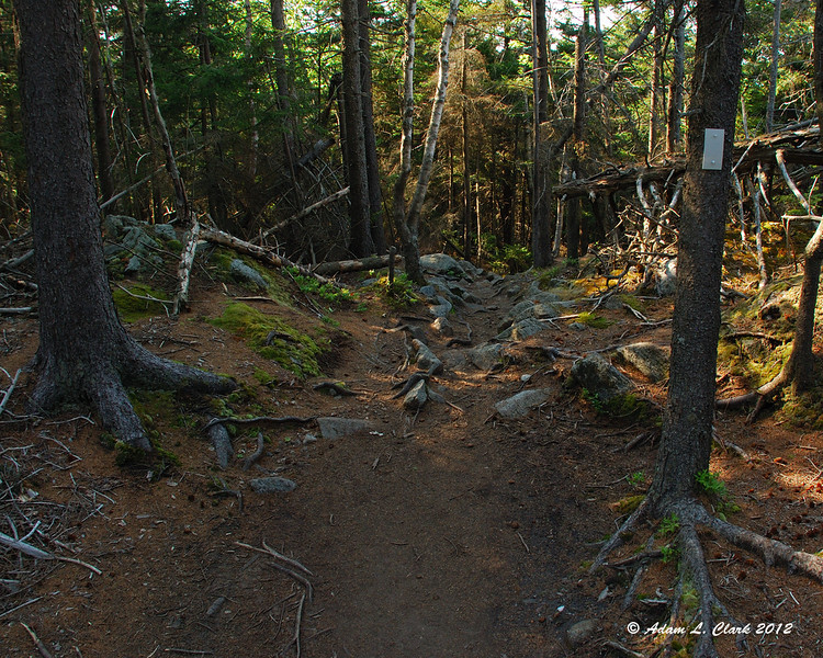 The trail before heading more steeply down for a while