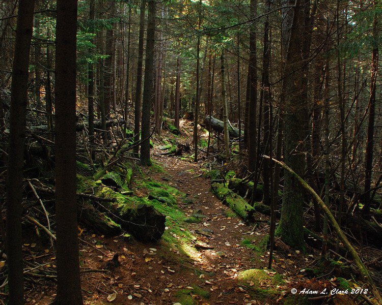 The Point Surprise Trail is a bit dark in places as it heads through some thick softwoods