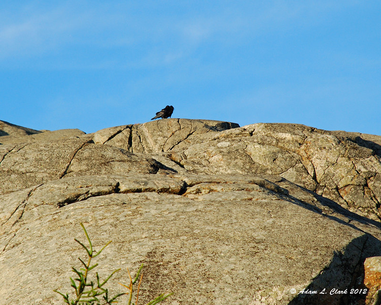 A couple of crows staying out of the window for a bit sitting on the rocks